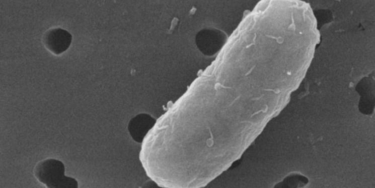 آنتی بیوتیک هایی که باکتری های خاص را هدف می گیرد